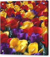 Singing Tulips L062 Acrylic Print