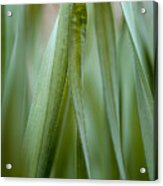 Single Blade Of Onion Grass Leaning - Color Version Acrylic Print
