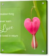 Single Bleeding Heart Flower In My Spring Garden Acrylic Print