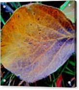 Single Brown Leaf Acrylic Print