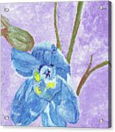 Single Delphinium Flower Acrylic Print