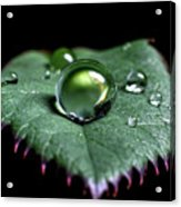 Single Drop Acrylic Print