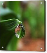 Single Drop Of Rain Water  Acrylic Print