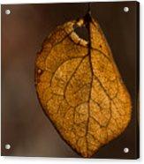 Single Fall Leaf Acrylic Print
