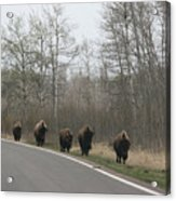 Single File Now Acrylic Print