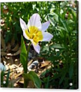 Single Flower - Simplify Series Acrylic Print