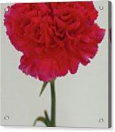Single Flower Acrylic Print