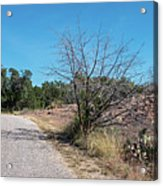Single Lane Road In The Hill Country Acrylic Print
