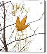Single Leaf In Fall Acrylic Print