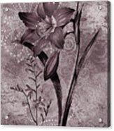 Single Lily-vintage Series  Acrylic Print