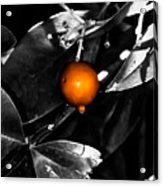 Single Orange Berry Acrylic Print