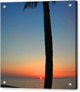 Single Palm And Sunset Acrylic Print