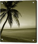 Single Palm At The Beach Acrylic Print