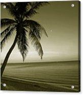 Single Palm At The Beach Acrylic Print