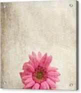 Single Pink Acrylic Print