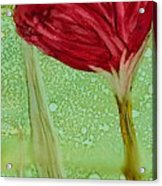 Single Poppy Acrylic Print