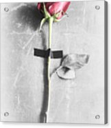 Single Rose Stem Taped On White Background  Acrylic Print