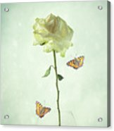 Single Stem White Rose Acrylic Print