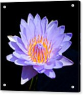 Single Water Lily Acrylic Print