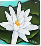 Single White Water Lily Acrylic Print