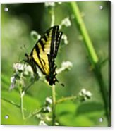 Sipping On Blackberry Blossoms Acrylic Print