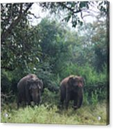 Sisters In Paradise Part 1 Acrylic Print