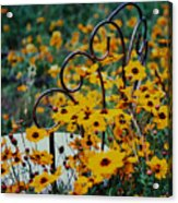 Sit In Feilds Of Gold Acrylic Print