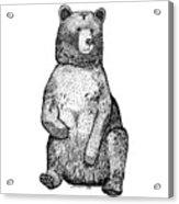 Sitting Bear Acrylic Print
