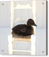 Sitting Duck Acrylic Print by Amy Tyler