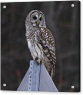 Sitting On The Sign Post Acrylic Print