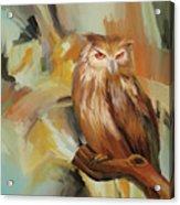 Sitting Owl Acrylic Print