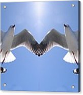 Six Heavenly Backlit Seagulls Flying Overhead In Blue Sky. Acrylic Print