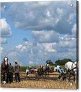 Six Horses Acrylic Print