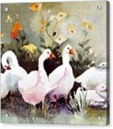 Six Quackers Acrylic Print