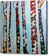 Six Tall Trees Acrylic Print