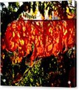 Sizzling Sumac Acrylic Print