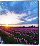 Skagit Floral Sunset Acrylic Print