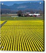Skagit Valley In Springtime Acrylic Print