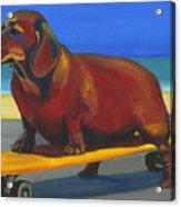 Skaterdog Acrylic Print by Debbie Brown