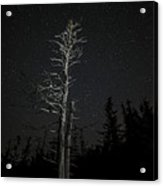 Skeletal Tree Starscape Acrylic Print