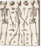 Skeletons Acrylic Print