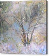 Sketch Of Halation Effect Through Trees Acrylic Print