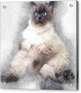 Sketch Of Regal Himalayan Cat - Not Acrylic Print