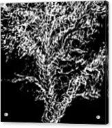 Sketchbook Tree 2-b-w Acrylic Print