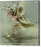Skimmer Acrylic Print