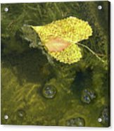 Skimming The Surface Acrylic Print