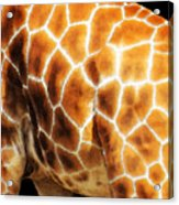 Skin Deep - Buy Giraffe Art Prints Acrylic Print