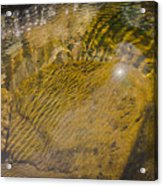 Skin River Acrylic Print