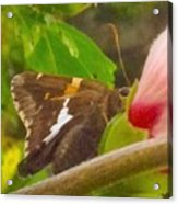 Skipper Trying To Hide Behind A Flower Acrylic Print