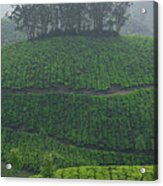 Skn 6550 From Tea's Perspective. Color Acrylic Print